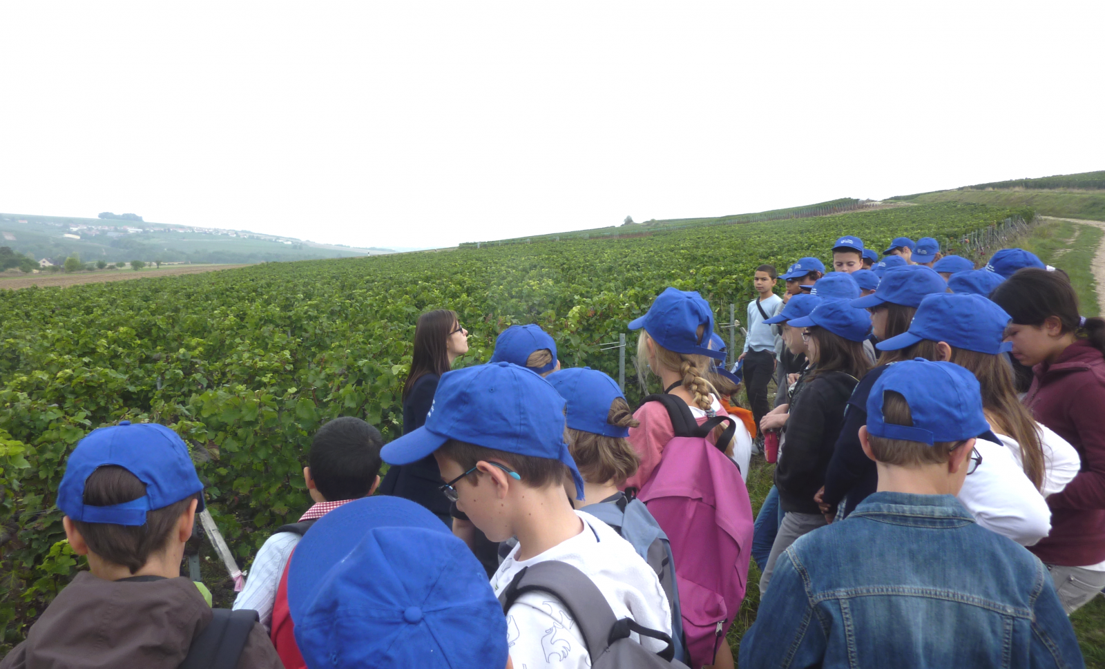scolaire_vigne